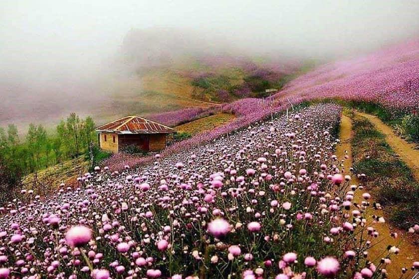 توریست های خارجی در گیلان
